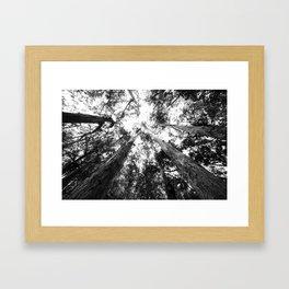 Baby redwoods (BW) Framed Art Print
