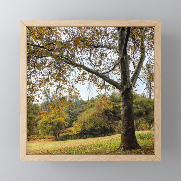 Autumn's Empty Promise Framed Mini Art Print