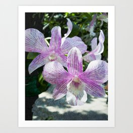 Thai Orchids Art Print