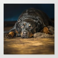 rottweiler Canvas Prints featuring Rottweiler resting by lifeandthat photography