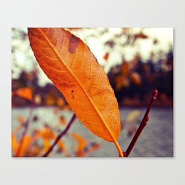 Lakeside leaf Canvas Print
