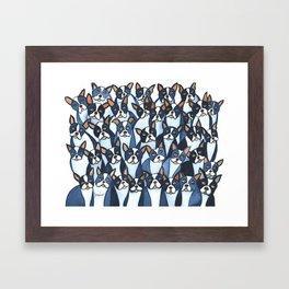 Many Boston Terriers Framed Art Print