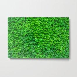 Deep Green Ivy Wall. Metal Print