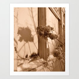 Winter Hydrangeas  Art Print