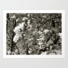 Places in Black & White: Plum Tree 18 Art Print