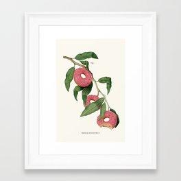 Donut Plant Framed Art Print