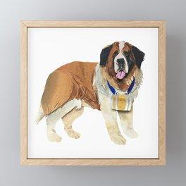 The Big Brown Saint Bernard Framed Mini Art Print