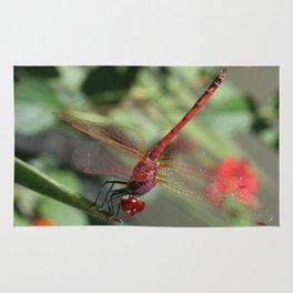 Red Skimmer or Firecracker Dragonfly Rug