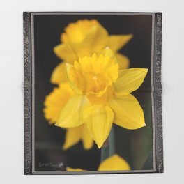 Trumpet Daffodil named Exception Throw Blanket