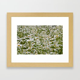 White and Yellow Daisies Framed Art Print