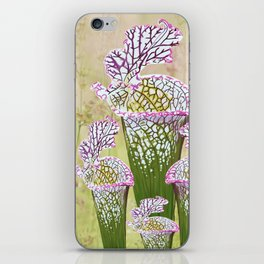 Sarracenia leucophylla iPhone Skin