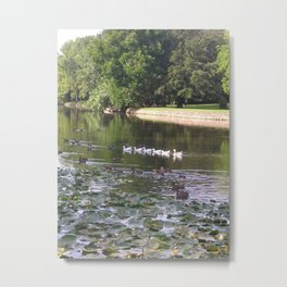 Ducks and Lilypads Metal Print