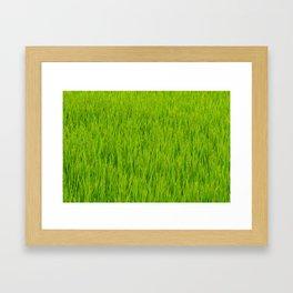 Green Japan Paddy field in summer Framed Art Print