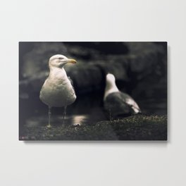 Seagull. The boss of the pond. Metal Print