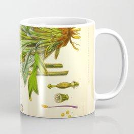 Purple Flowers Vintage Botanical Illustration Scientific Species Drawing Coffee Mug