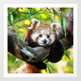 CArt red Panda Baby Art Print