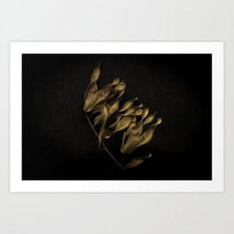 SEEDS 07 Art Print