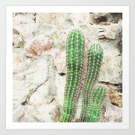 Courtyard Cactus Art Print