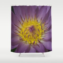 Water Lily - Nymphaea sp. Shower Curtain