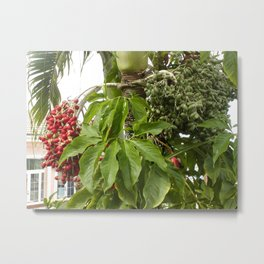Red and Green Berries Metal Print