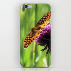 Great Spangled Fritillary iPhone & iPod Skin