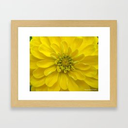 Bright Yellow Zinnia Flower Framed Art Print