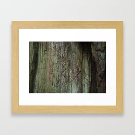 California Red Wood Framed Art Print