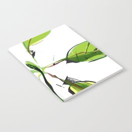 New Growth Notebook