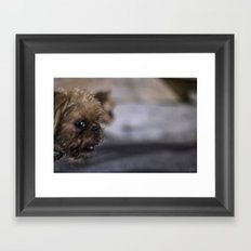 Grampa The Dog Framed Art Print