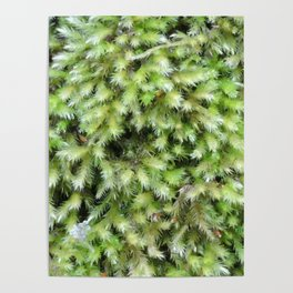 TEXTURES -- Moss on a Tree Trunk Poster