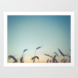Summer of Straw Art Print