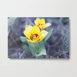 Early Bloom Metal Print