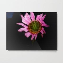 Pink Flower with Black Background Metal Print