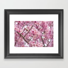 Cherry Blossoms in spring Framed Art Print