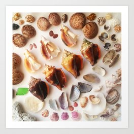 Cockles & Conch Art Print