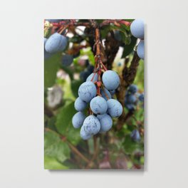 Blackthorn fruit Metal Print