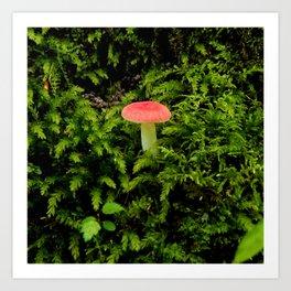Lonely Mushroom Art Print