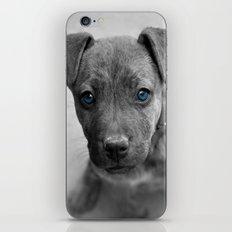 Siouxsie iPhone & iPod Skin