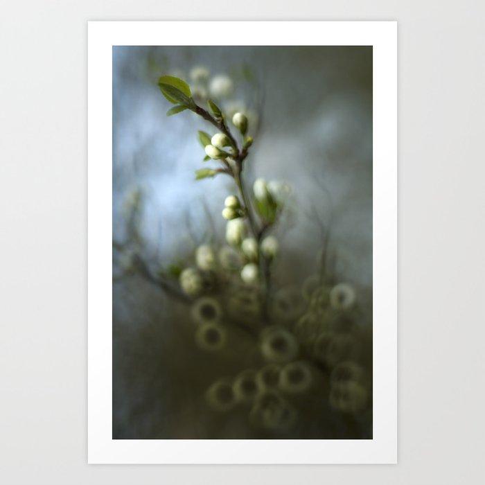 Apple blossom Kunstdrucke