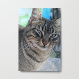 Inquisitive Tabby Cat With Green Eyes  Metal Print