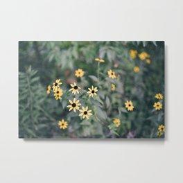 August Wildflowers VI Metal Print
