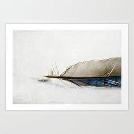 Blue Jay Feather Art Print