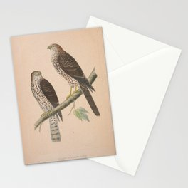 Levant Sparrow Hawk 2 Stationery Cards