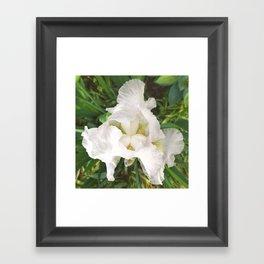 493 - White Iris Framed Art Print