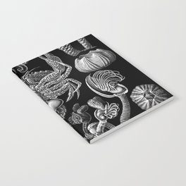 Ernst Haeckel Cirripedia Barnacles Crabs Notebook