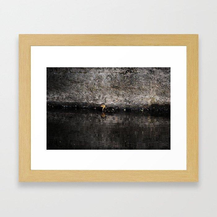 The little anatinae Framed Art Print