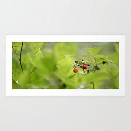 Raspberry Sunrise Art Print