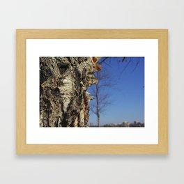 River Birch Bark up against the blues Framed Art Print