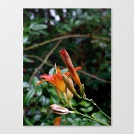 Fire flower Canvas Print