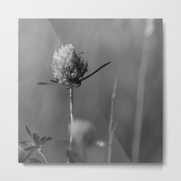 Clover black and white Metal Print